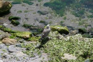 Nesebar Bulgaria viajes mar Negro