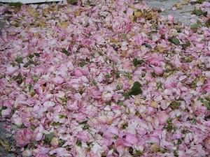 Festival de las Rosas Karlovo circuito