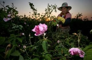 Bulgaria El Valle de las Rosas